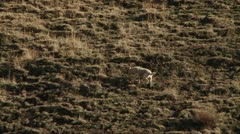 Dog running up a large hill Stock Footage