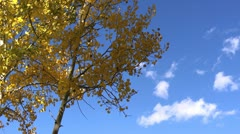 Fall Colors Sky Stock Footage
