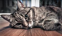 Stock Photo of Cat