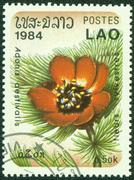 Stamp printed by Laos, shows Adonis aestivalis Stock Photos