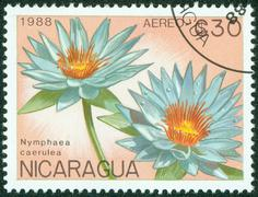 stamp printed in Nicaragua shows flower - stock photo