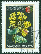 stamp printed by Hungary, shows flower - stock photo