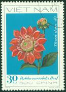 stamp printed in Vietnam shows red dahlia - stock photo