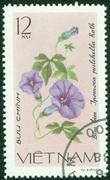 stamp printed in VIETNAM shows a Ipomoea pulchella - stock photo
