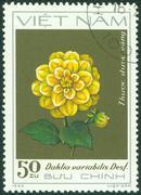stamp printed inVIETNAM shows Yellow dahlia - stock photo