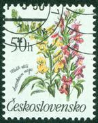 stamp printed in Czechoslovakia showing flowers - stock photo