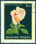 stamp printed in Hungary shows a rose - stock photo