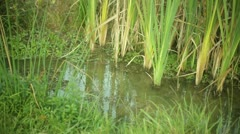 Wetlands watershed swamp swamp land environmental environment Stock Footage