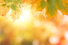 autumn maple leave background with boked - stock photo