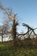 Fallen Tree 2 - stock photo