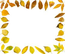 Stock Photo of border of autumn leaves
