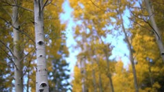 Stock Video Footage of Fall Colors Trees Bokeh