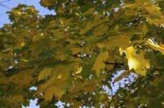 Autumn Foliage.JPG Stock Photos