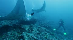 Diver against Manta rays Stock Footage