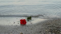 Beautiful red rose brought by the water on the seashore Stock Footage