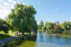 view of the common park lake in boston - stock photo