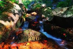 Fall stream Stock Photos