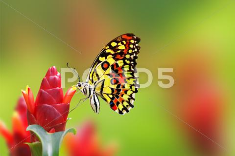 Stock photo of butterfly on flowers