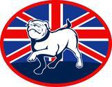 Proud english bulldog marching with british flag Stock Illustration