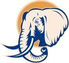 African bull elephant head Stock Illustration