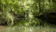 Stock Video Footage of Amid Nature - Floating up a Peaceful Forest Lined Southern Creek