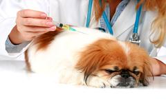 Dog healthcare. Stock Photos