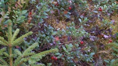 Berries Stock Footage