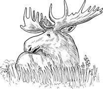 Stock Illustration of moose or common european elk drawing