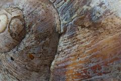Stock Photo of snail shell background