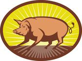 Pig side view with sunburst Stock Illustration