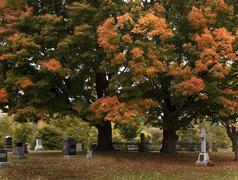 A fall view of a cemetery with big colorful trees. Stock Photos