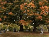 Stock Photo of a fall view of a cemetery with big colorful trees.