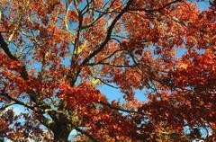 autumnal tree - stock photo