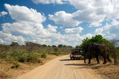 Safari Truck and Elephant - stock photo
