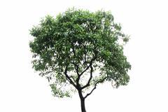 Stock Photo of tree isolated