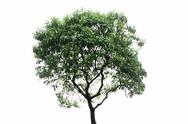 Stock Photo of tree isolated