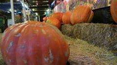 Large Pumpkins Stock Footage