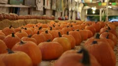 Rows of Pumpkins - stock footage