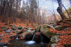 bulgarian forest stream - stock photo