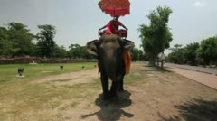 Tourist riding elephant in Thailand - stock footage