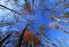 fall tree tops - stock photo