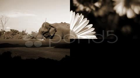 After Effects Project - Pond5 Flicker Slide Show Version 2 12289215