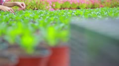 Woman checking the plants Stock Footage