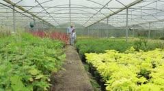 Gardener and grandchild walking through greenhouse Stock Footage