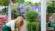 Stock Video Footage of Woman working at the garden center