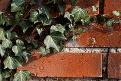 Ivy on a wall Stock Photos