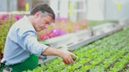 Man working at the greenhouse Stock Footage