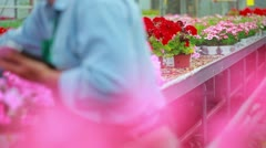 Man working at a greenhouse holding a tablet pc Stock Footage