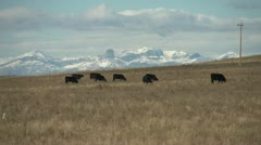 Cattle grazing mountains in BG, autumn Stock Footage