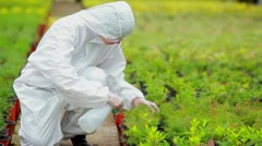 Gardener wearing protection suit spraying the plants Stock Footage